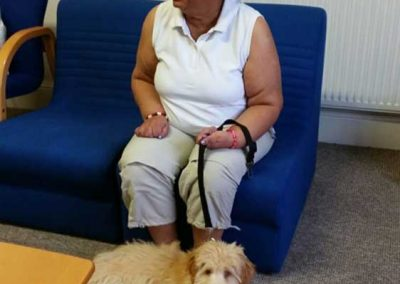 Holly House Pet Therapy
